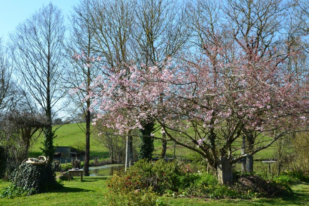 Un cerisier en fleur à Bulle Nature, au lieu-dit La Prévisière, au Poiré sur Vie en Vendée
