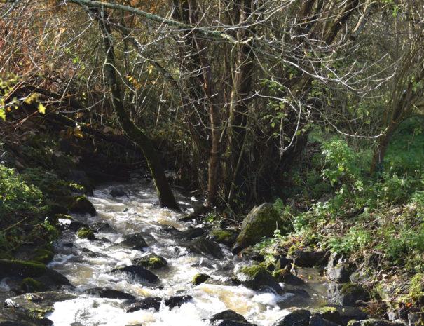 Le ruisseau près de la rivière La Vie à Bulle Nature à la Prévisière au Poiré sur Vie en Vendée, hébergements naturels et zoothérapie