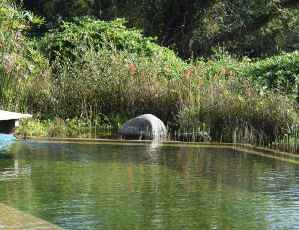 La piscine naturelle à Bulle Nature à la Prévisière au Poiré sur Vie en Vendée, hébergements naturels et zoothérapie