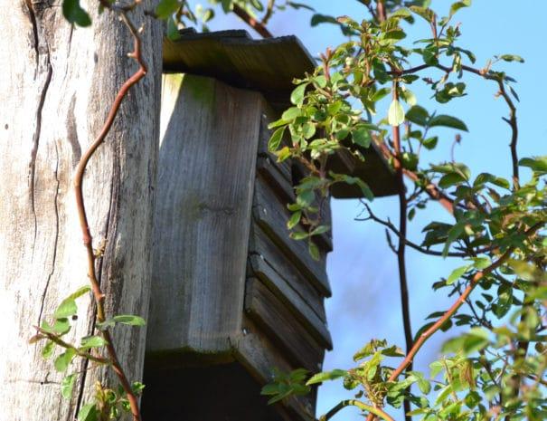 Une cabane à oiseau à Bulle Nature à la Prévisière au Poiré sur Vie en Vendée, hébergements naturels et zoothérapie